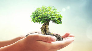 growing tree image